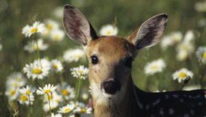 Deer Fence The Wireless Deer Fence 174 For Guaranteed Deer